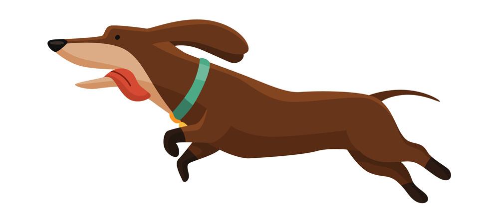 Hund som springer